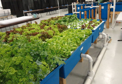 home-garden-aquaponic-system-02